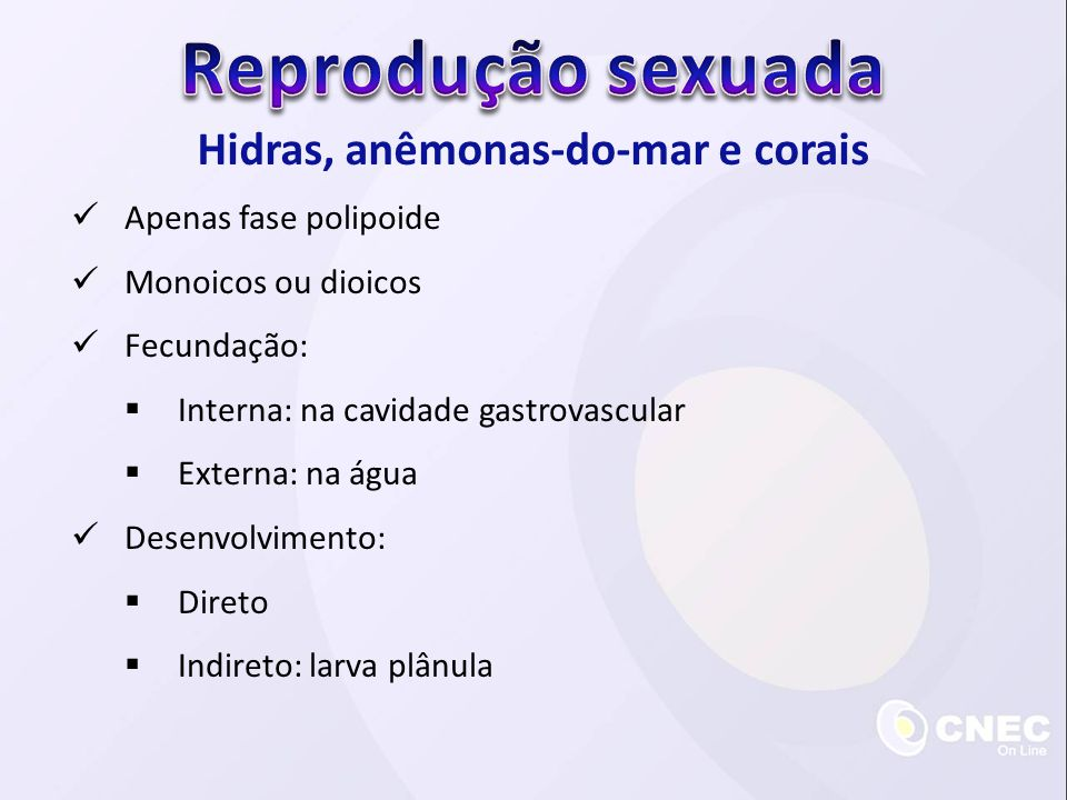 Hidras, anêmonas-do-mar e corais