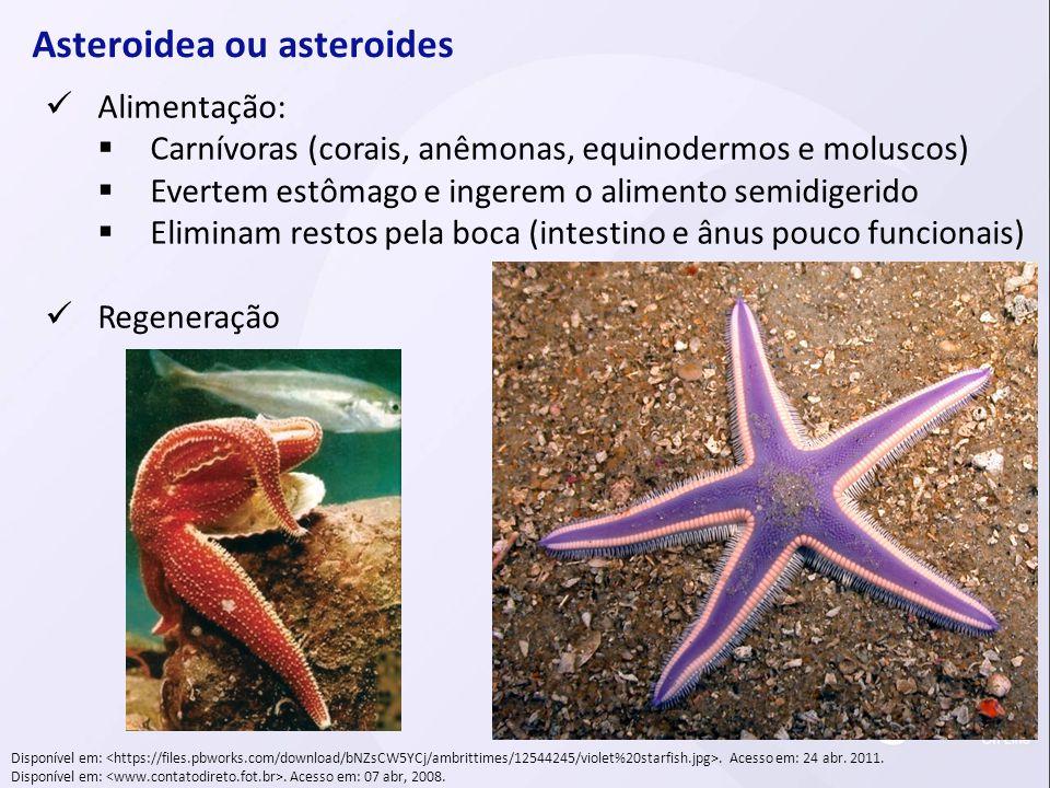 Asteroidea ou asteroides