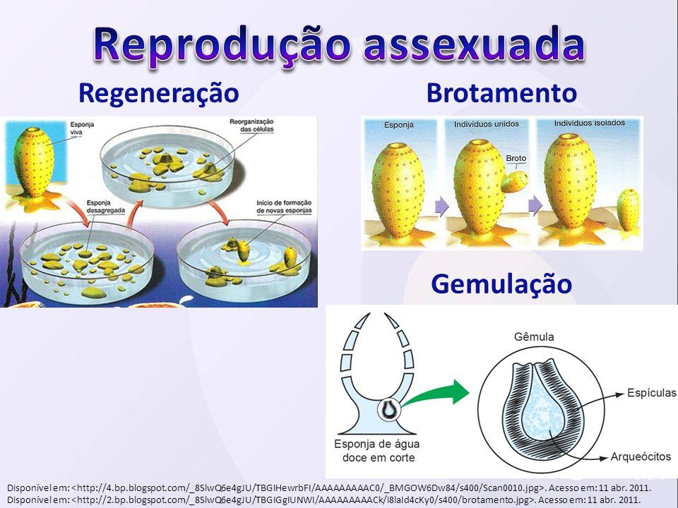 Reprodução assexuada Regeneração Brotamento Gemulação