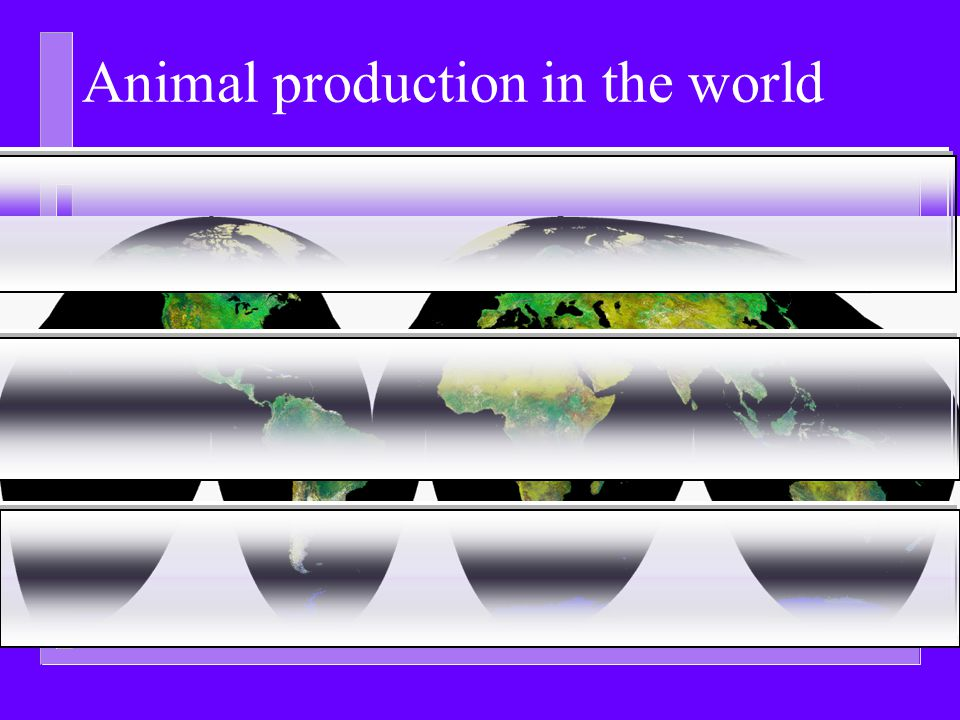 Animal production in the world