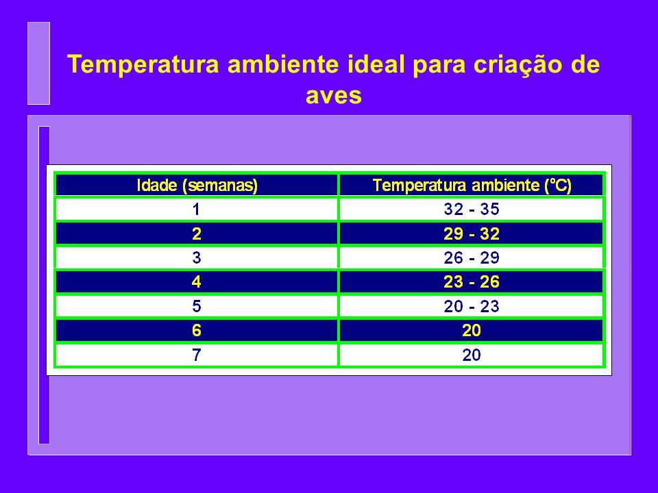 Temperatura ambiente ideal para criação de aves
