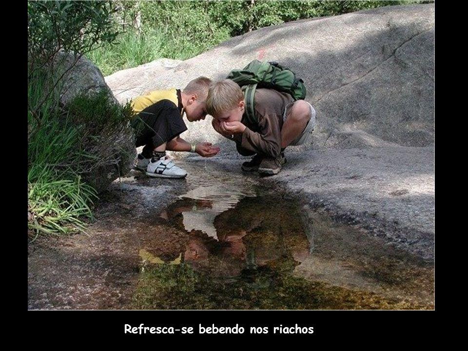 Refresca-se bebendo nos riachos