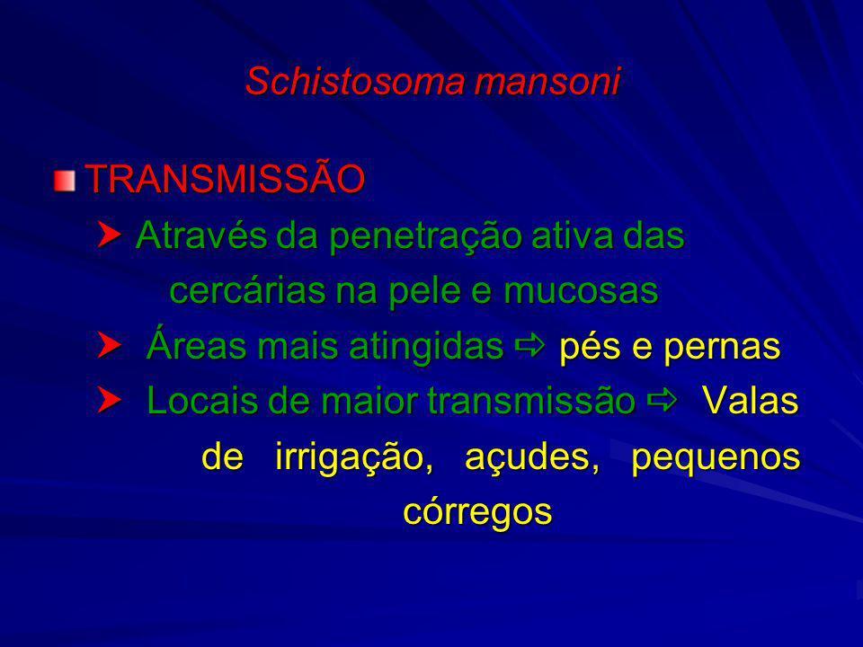 Schistosoma mansoni TRANSMISSÃO.  Através da penetração ativa das. cercárias na pele e mucosas.  Áreas mais atingidas  pés e pernas.