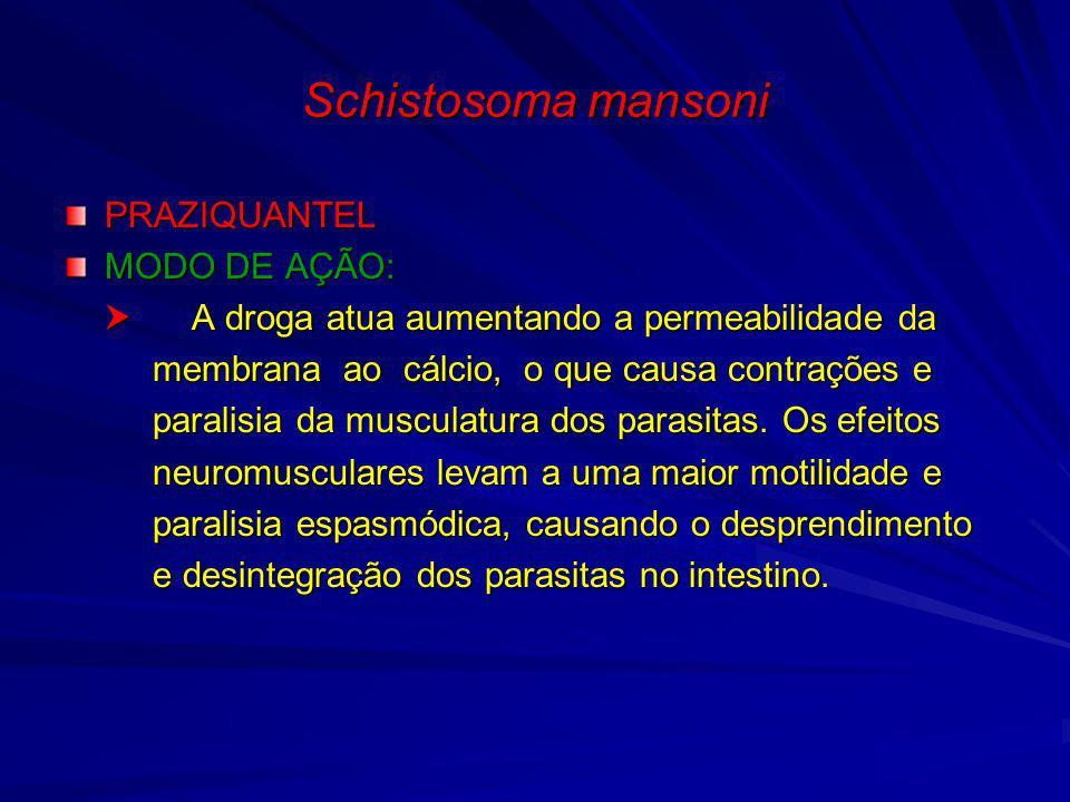 Schistosoma mansoni PRAZIQUANTEL MODO DE AÇÃO: