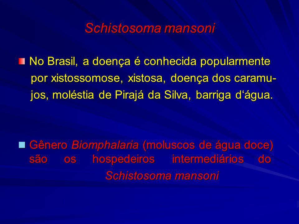 Schistosoma mansoni No Brasil, a doença é conhecida popularmente