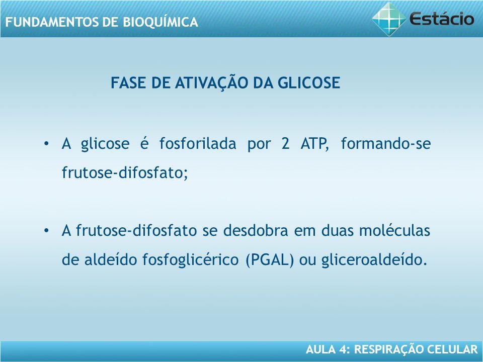 FASE DE ATIVAÇÃO DA GLICOSE
