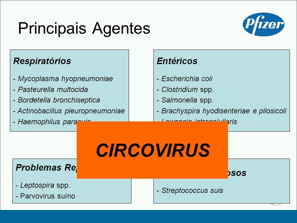CIRCOVIRUS Principais Agentes Respiratórios Entéricos