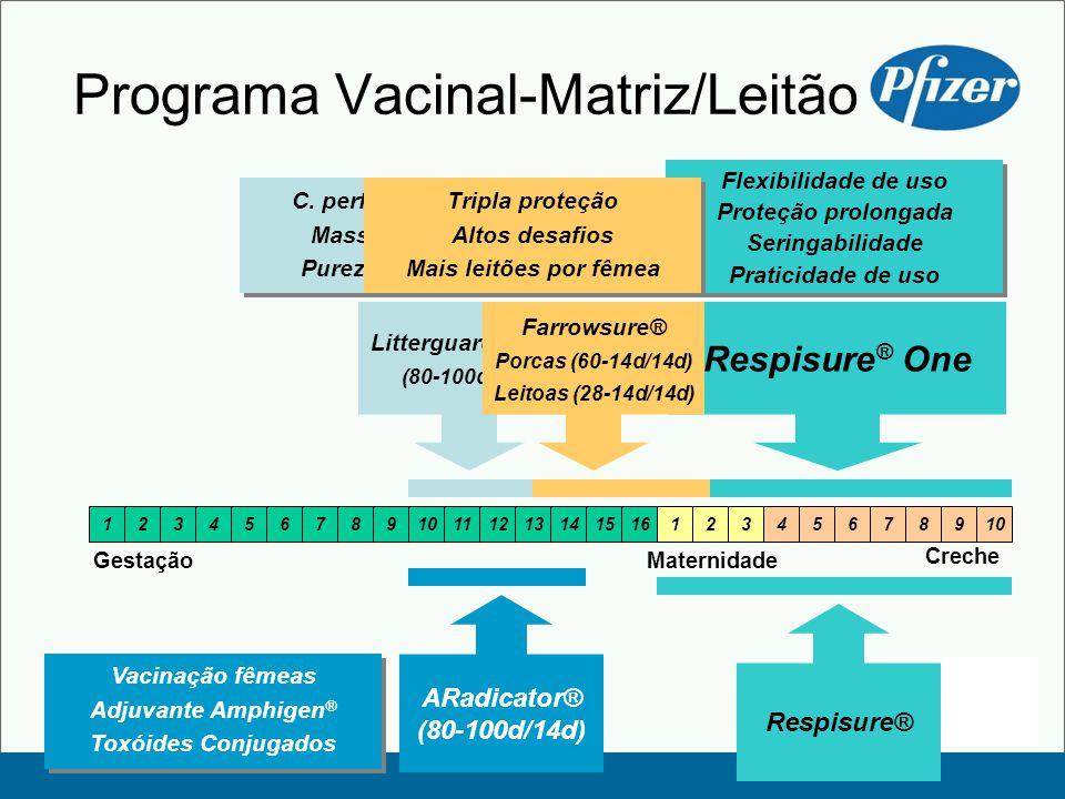 Programa Vacinal-Matriz/Leitão