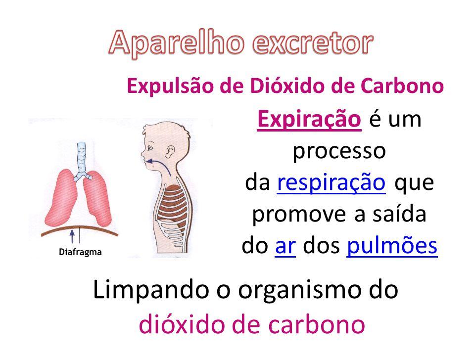 Aparelho excretor Limpando o organismo do dióxido de carbono