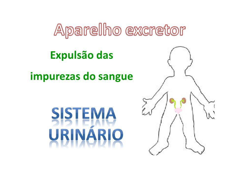 Aparelho excretor Sistema urinário
