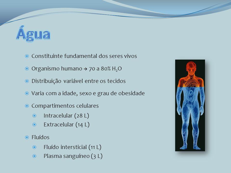 Água Constituinte fundamental dos seres vivos