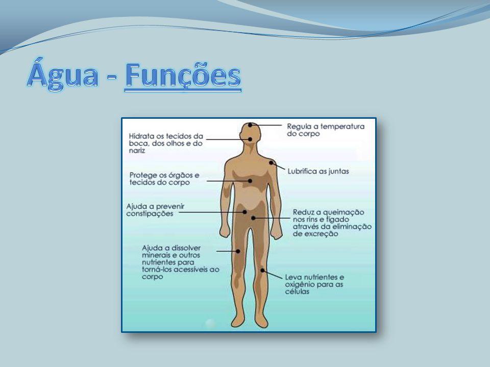 Água - Funções Meio onde se processam as reacções biológicas