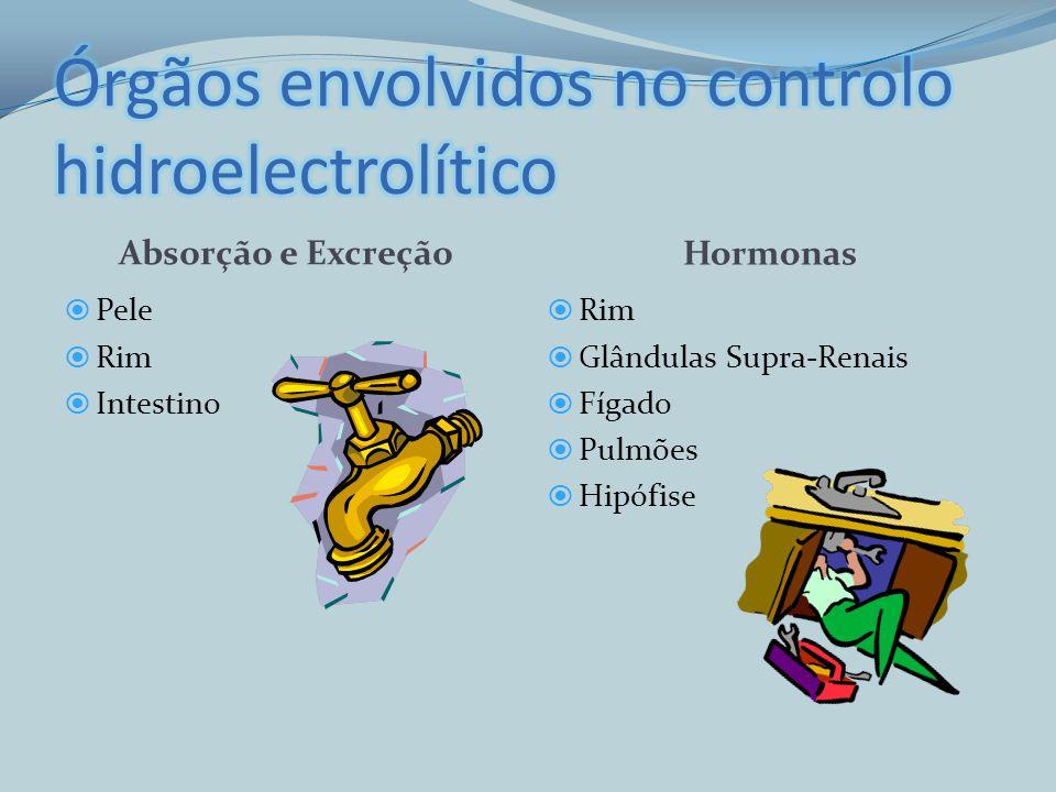 Órgãos envolvidos no controlo hidroelectrolítico