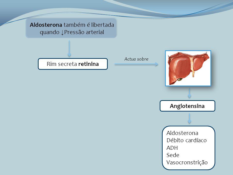 Aldosterona também é libertada quando ↓Pressão arterial