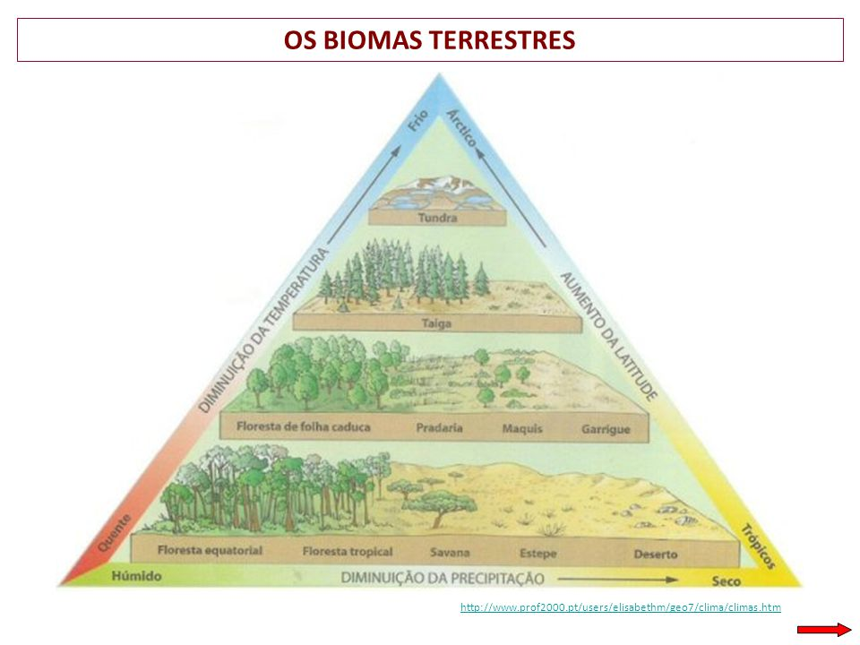 OS BIOMAS TERRESTRES http://www.prof2000.pt/users/elisabethm/geo7/clima/climas.htm