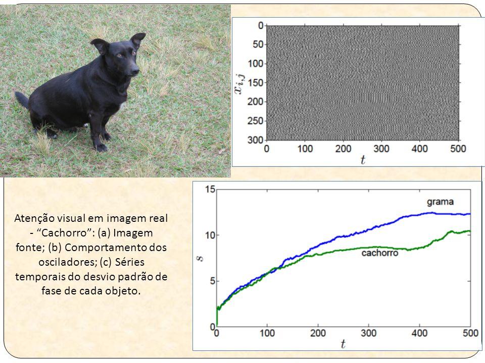 Atenção visual em imagem real - Cachorro : (a) Imagem fonte; (b) Comportamento dos osciladores; (c) Séries temporais do desvio padrão de fase de cada objeto.