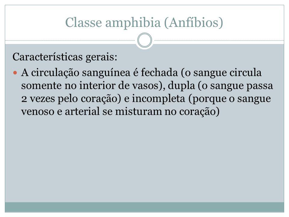Classe amphibia (Anfíbios)