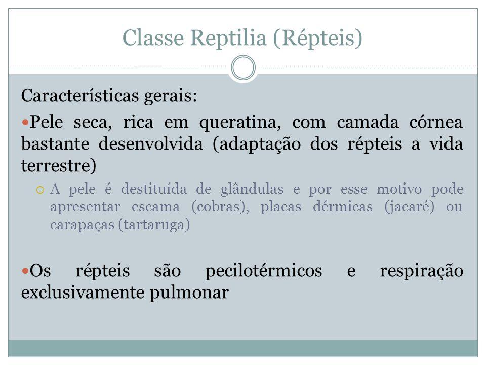Classe Reptilia (Répteis)