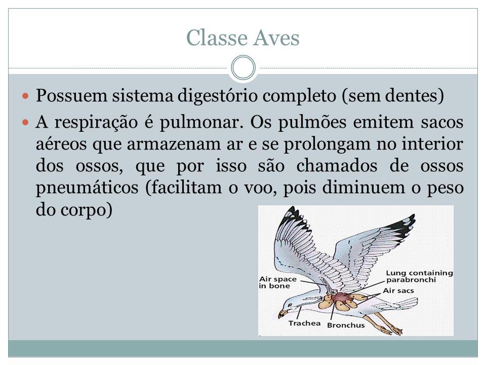Classe Aves Possuem sistema digestório completo (sem dentes)