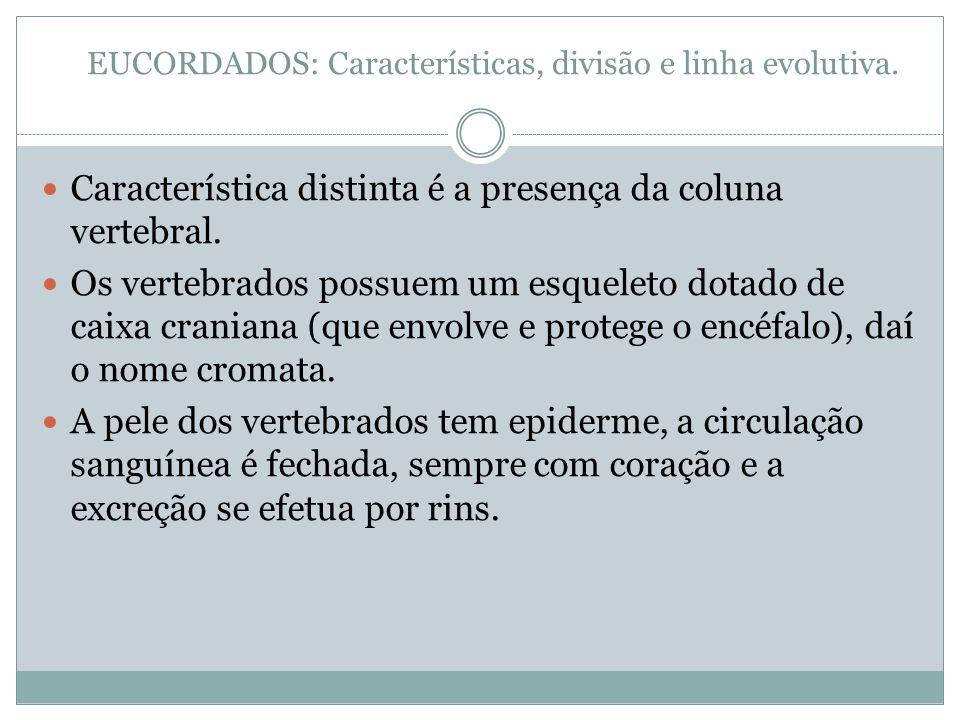 EUCORDADOS: Características, divisão e linha evolutiva.