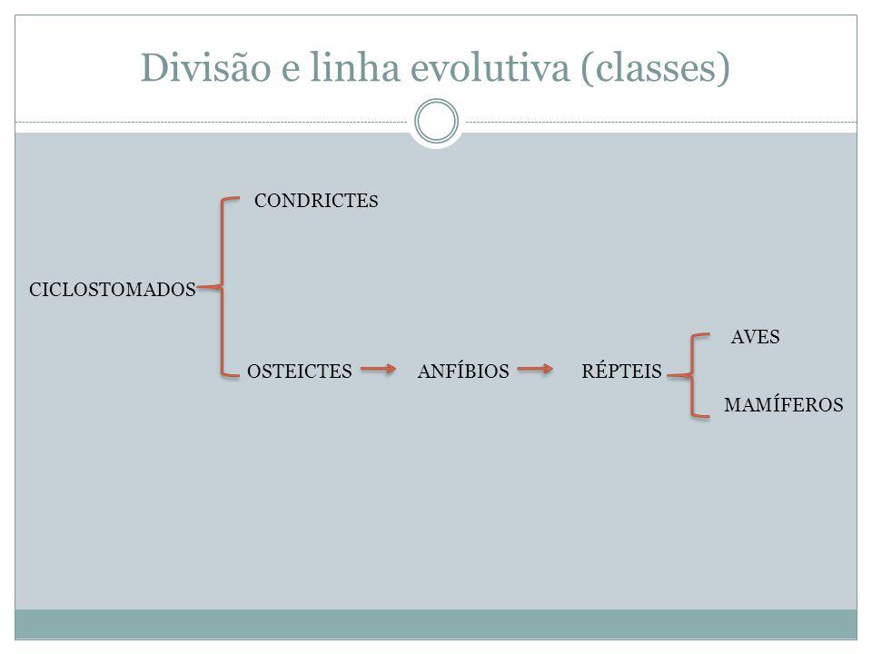 Divisão e linha evolutiva (classes)