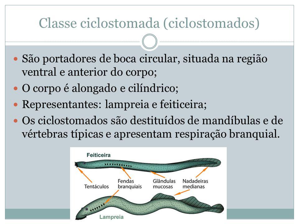 Classe ciclostomada (ciclostomados)