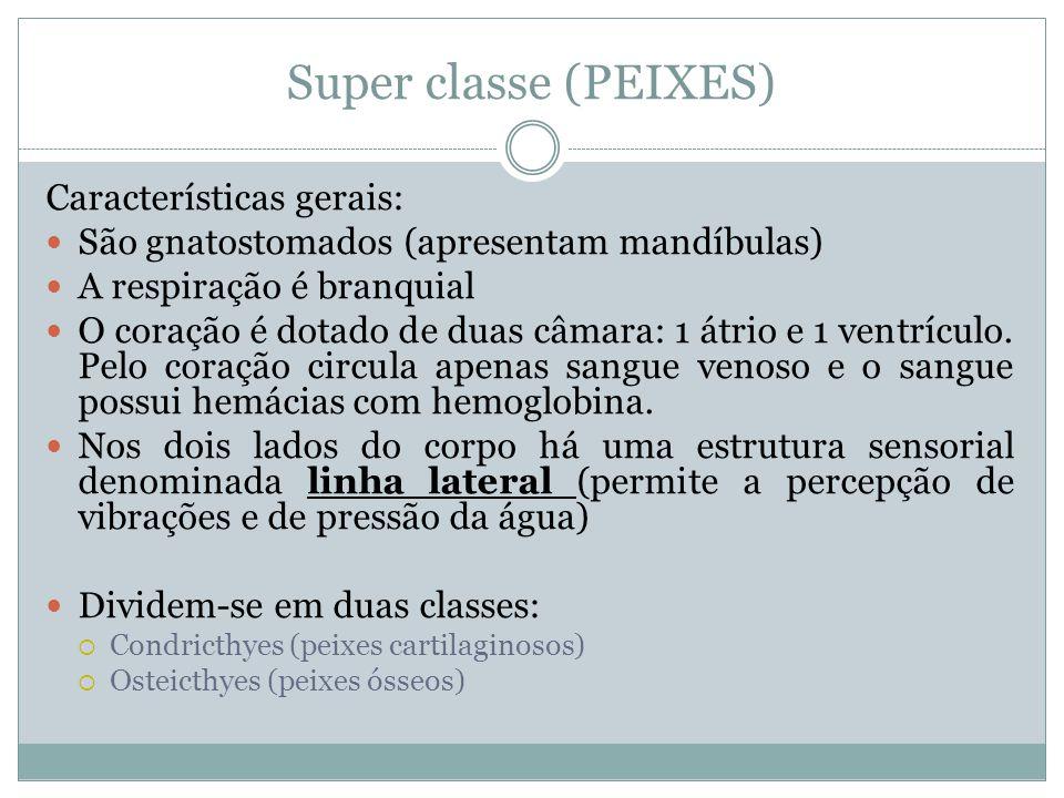 Super classe (PEIXES) Características gerais: