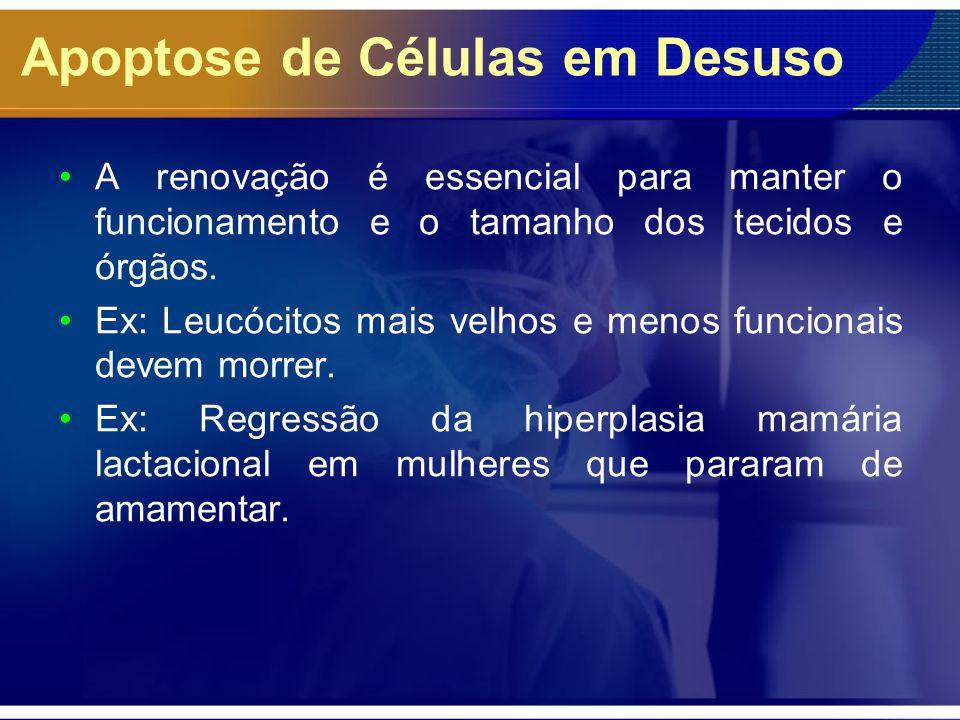 Apoptose de Células em Desuso