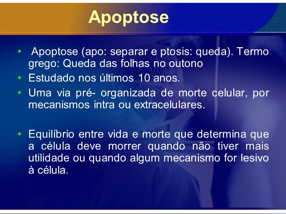 Apoptose Apoptose (apo: separar e ptosis: queda). Termo grego: Queda das folhas no outono. Estudado nos últimos 10 anos.