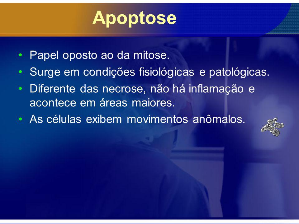 Apoptose Papel oposto ao da mitose.