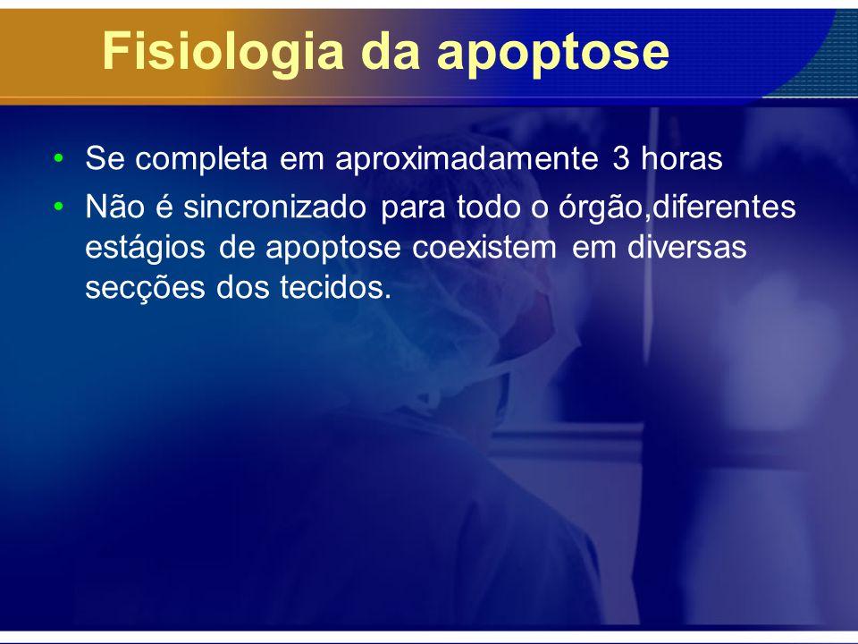Fisiologia da apoptose