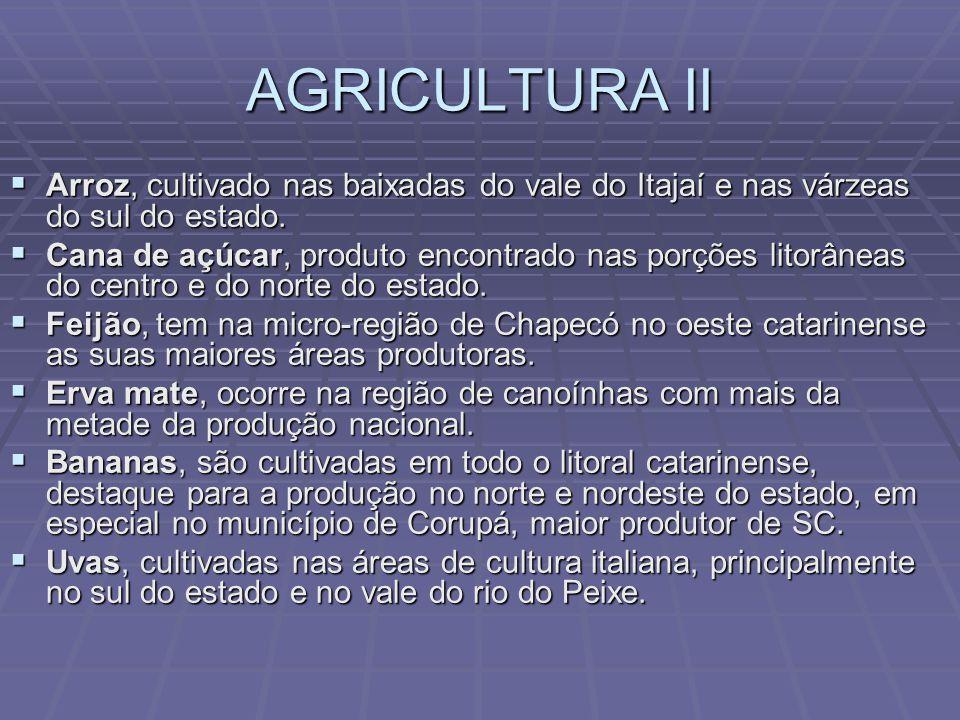 AGRICULTURA II Arroz, cultivado nas baixadas do vale do Itajaí e nas várzeas do sul do estado.