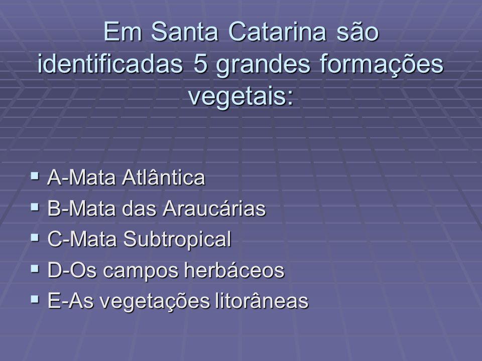 Em Santa Catarina são identificadas 5 grandes formações vegetais: