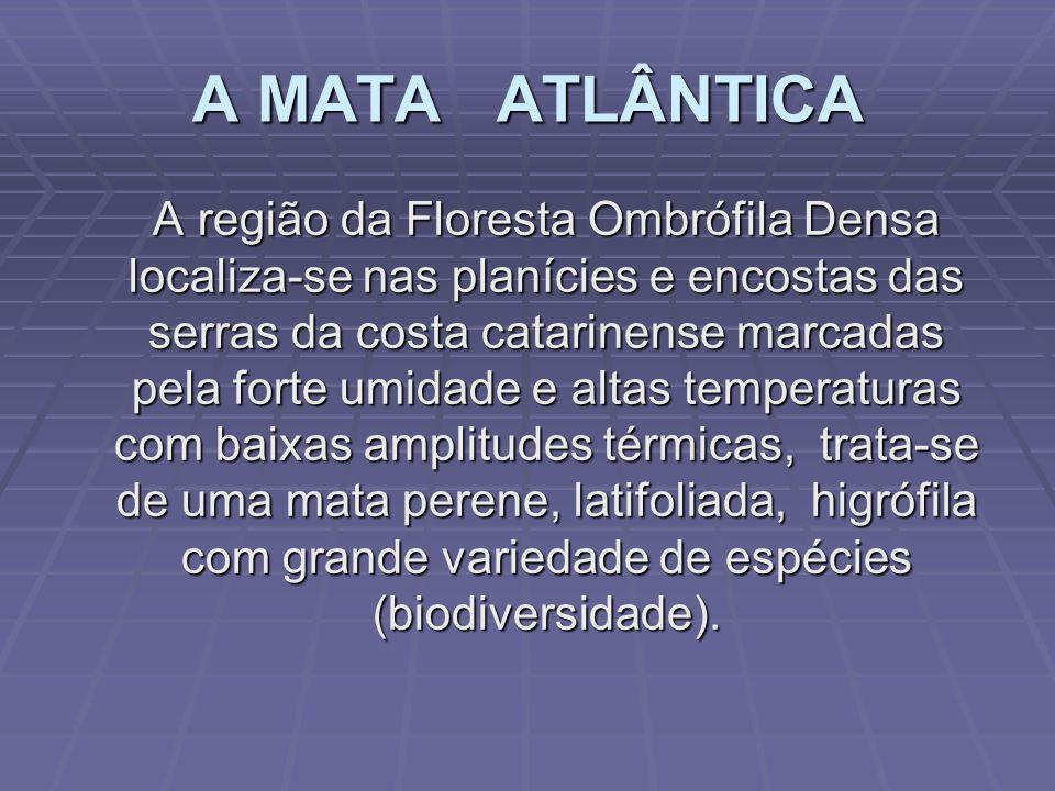 A MATA ATLÂNTICA