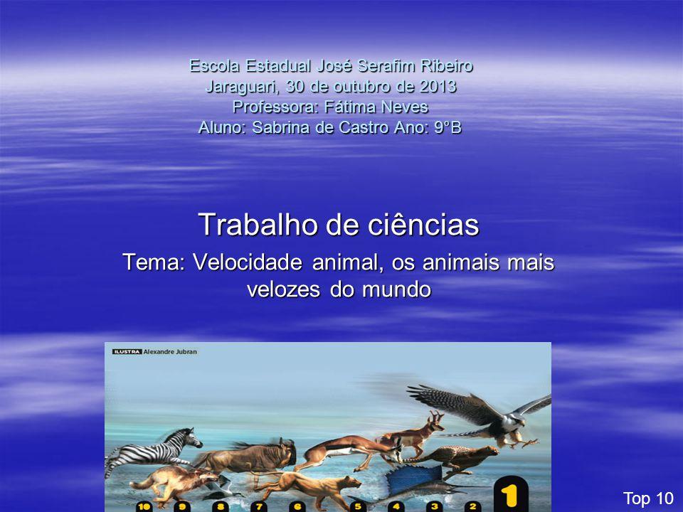 Tema: Velocidade animal, os animais mais velozes do mundo