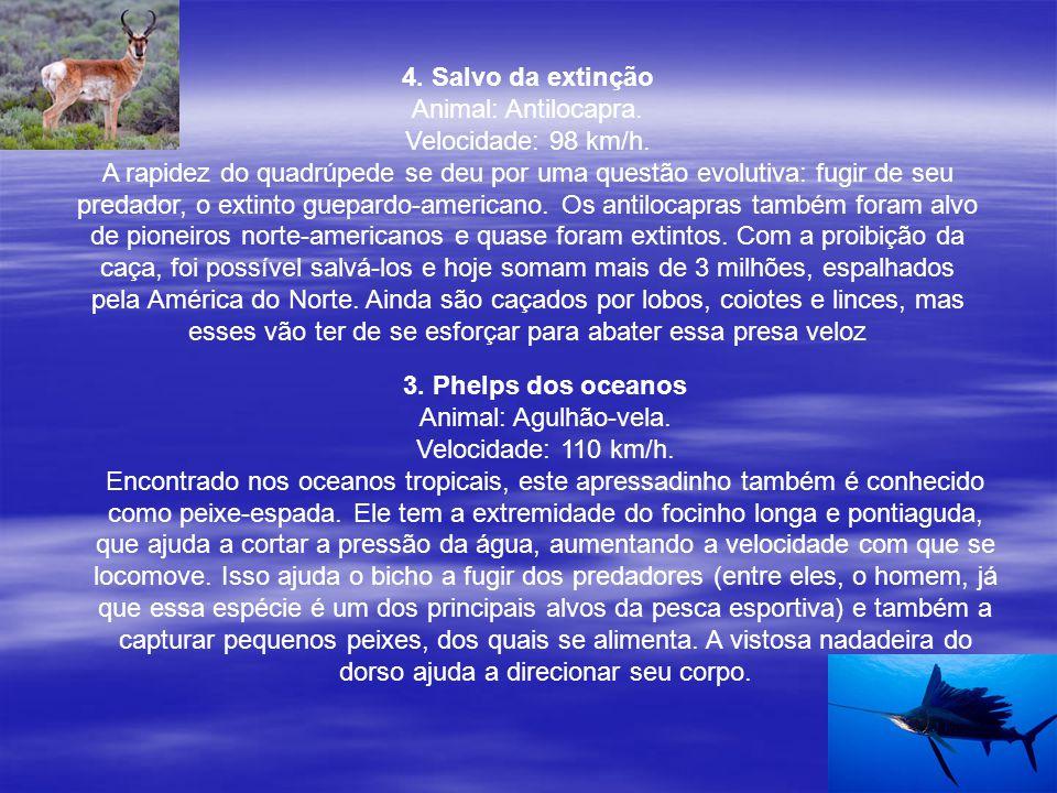 4. Salvo da extinção Animal: Antilocapra. Velocidade: 98 km/h.