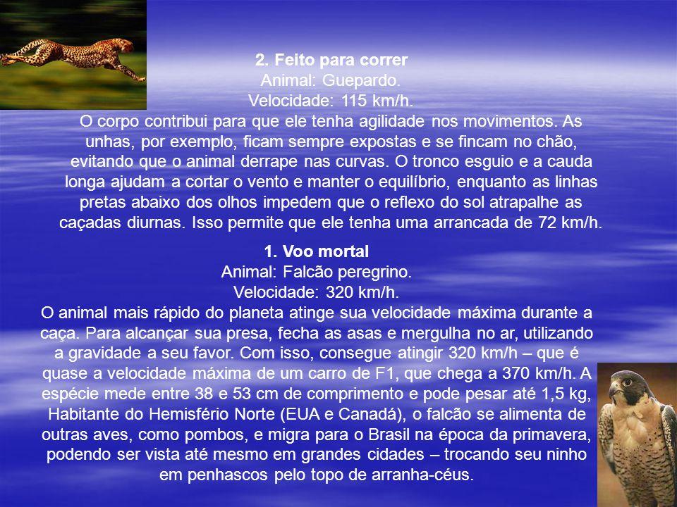 Animal: Falcão peregrino.