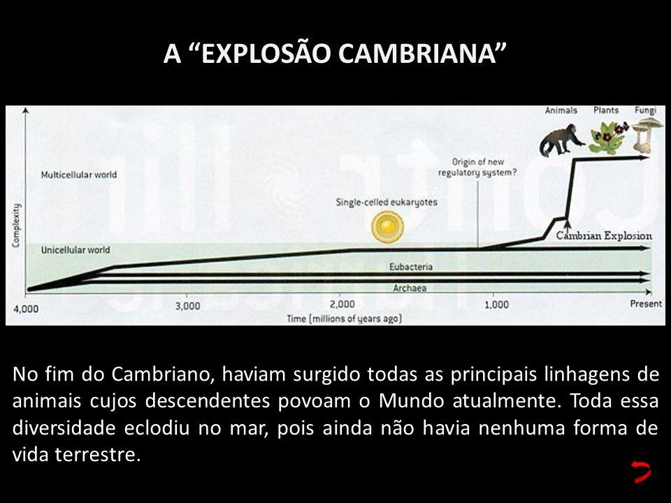 A EXPLOSÃO CAMBRIANA