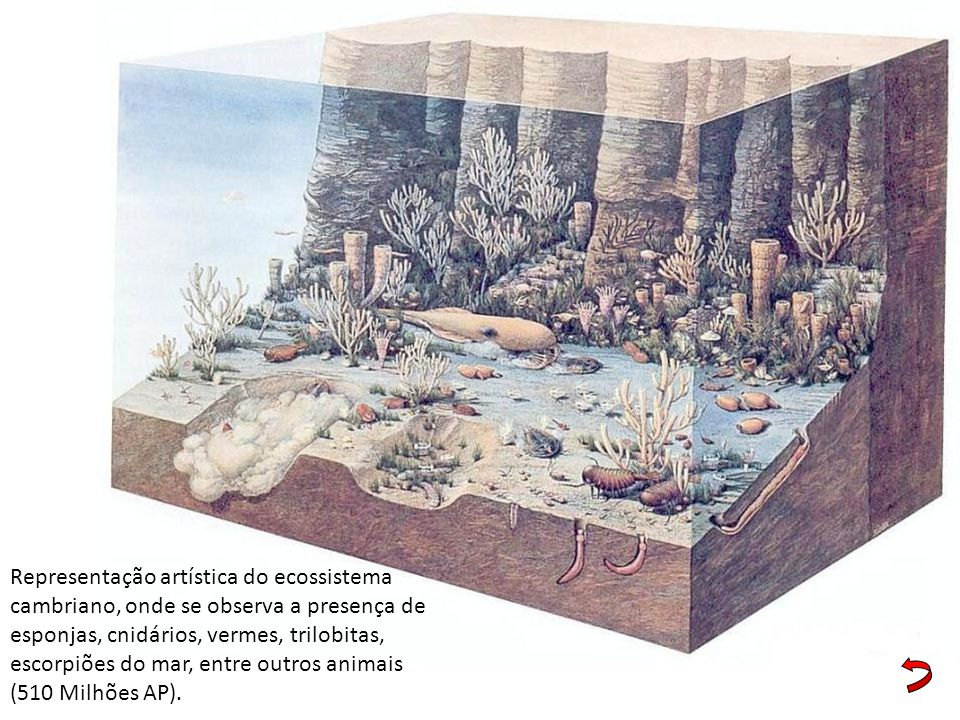 Representação artística do ecossistema cambriano, onde se observa a presença de esponjas, cnidários, vermes, trilobitas, escorpiões do mar, entre outros animais