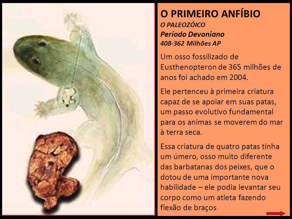 O PRIMEIRO ANFÍBIO O PALEOZÓICO. Período Devoniano. 408-362 Milhões AP.