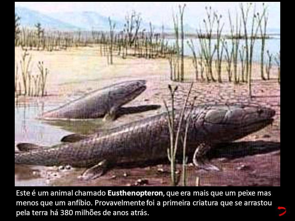 Este é um animal chamado Eusthenopteron, que era mais que um peixe mas menos que um anfíbio.