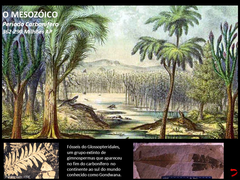 O MESOZÓICO Período Carbonífero 362-290 Milhões AP