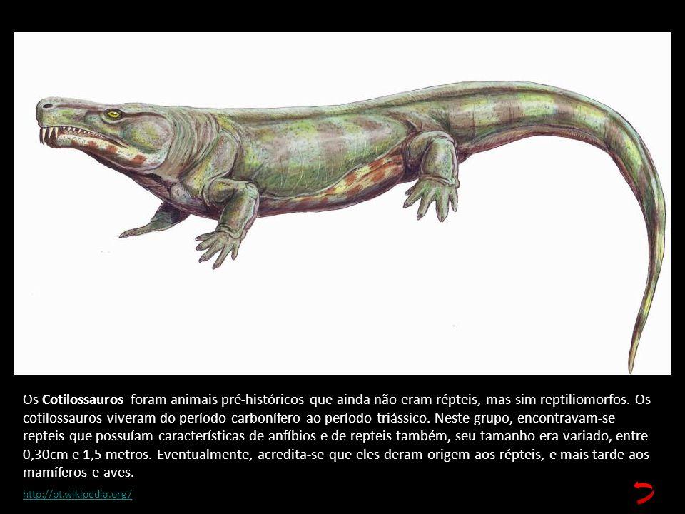 Os Cotilossauros foram animais pré-históricos que ainda não eram répteis, mas sim reptiliomorfos. Os cotilossauros viveram do período carbonífero ao período triássico. Neste grupo, encontravam-se repteis que possuíam características de anfíbios e de repteis também, seu tamanho era variado, entre 0,30cm e 1,5 metros. Eventualmente, acredita-se que eles deram origem aos répteis, e mais tarde aos mamíferos e aves.