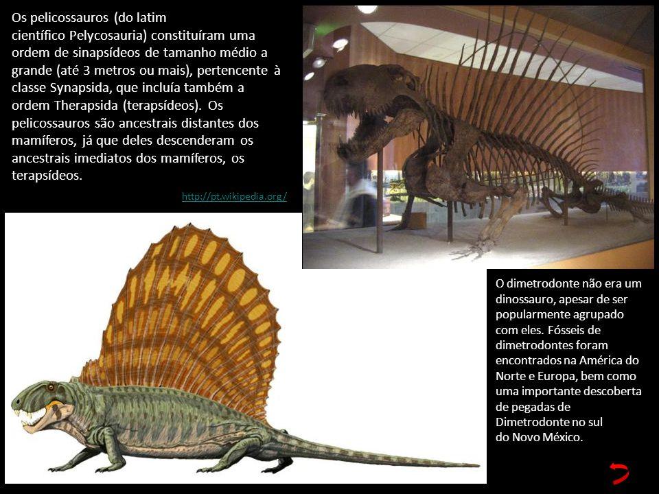 Os pelicossauros (do latim científico Pelycosauria) constituíram uma ordem de sinapsídeos de tamanho médio a grande (até 3 metros ou mais), pertencente à classe Synapsida, que incluía também a ordem Therapsida (terapsídeos). Os pelicossauros são ancestrais distantes dos mamíferos, já que deles descenderam os ancestrais imediatos dos mamíferos, os terapsídeos.