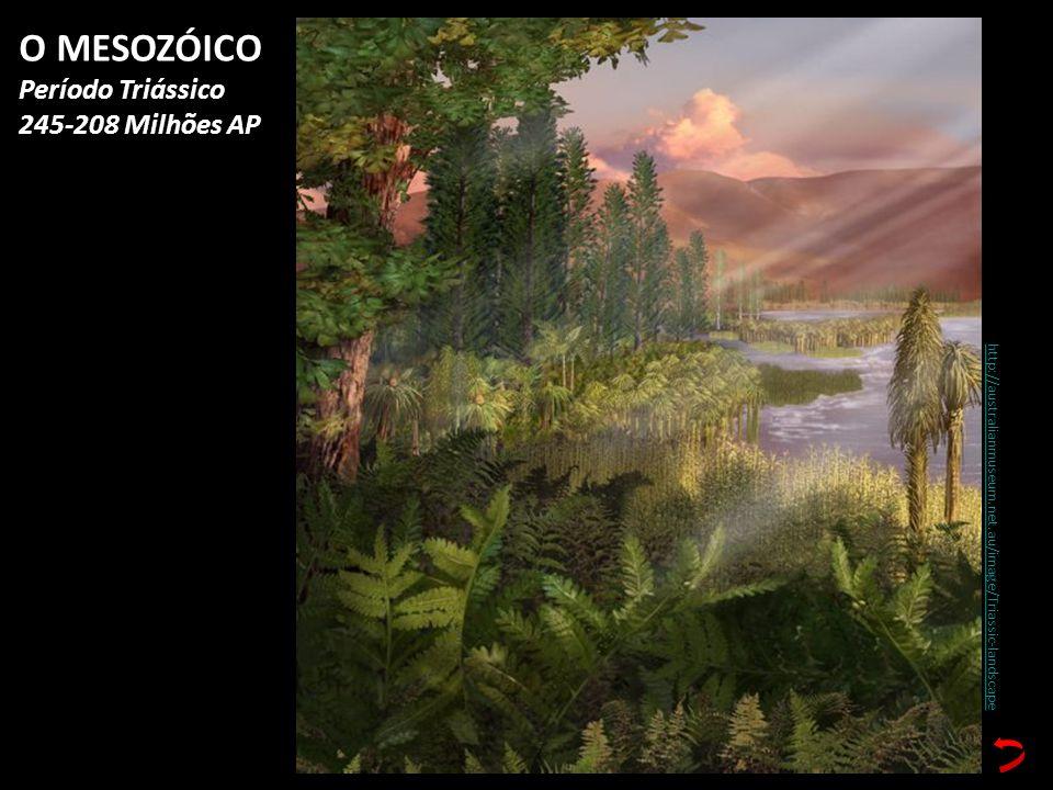O MESOZÓICO Período Triássico 245-208 Milhões AP
