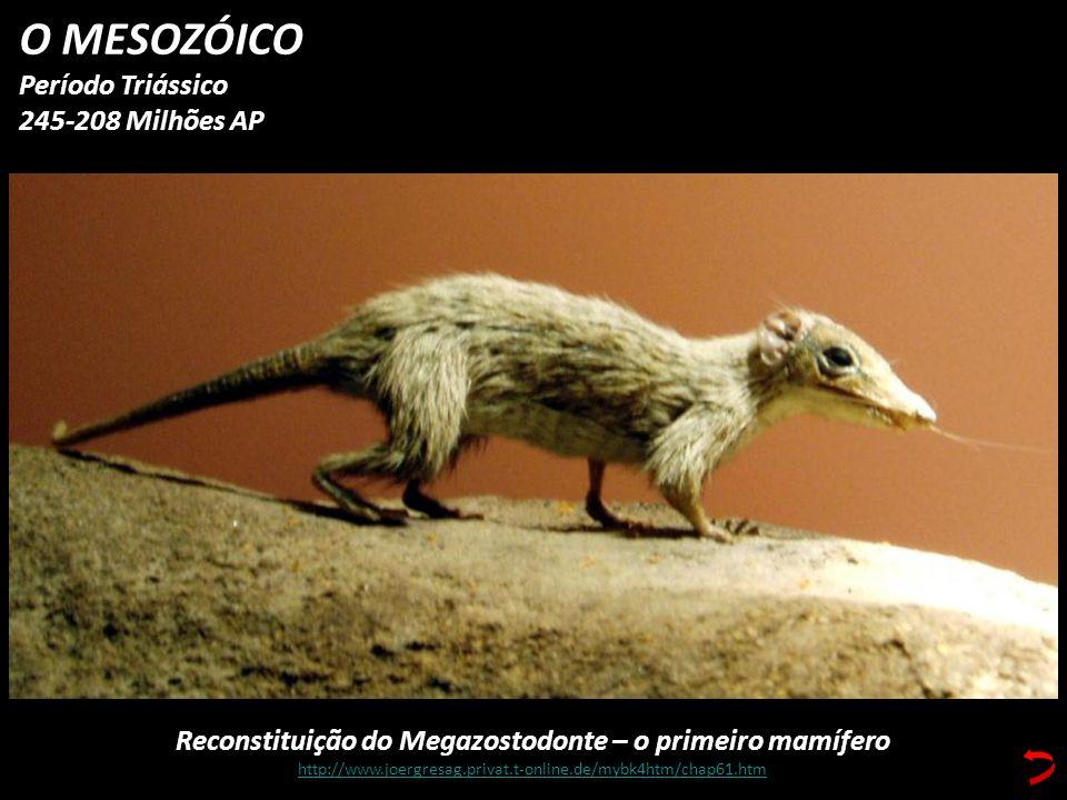 Reconstituição do Megazostodonte – o primeiro mamífero