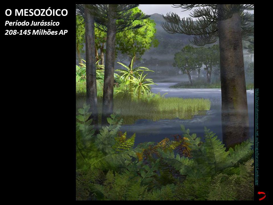 O MESOZÓICO Período Jurássico 208-145 Milhões AP