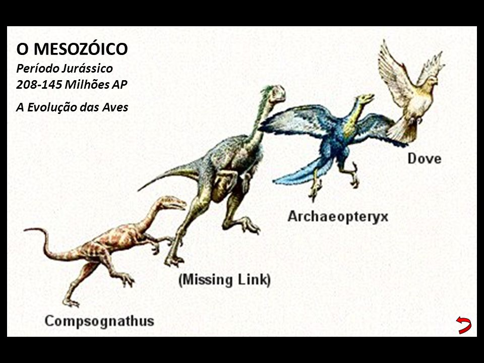 O MESOZÓICO Período Jurássico 208-145 Milhões AP A Evolução das Aves