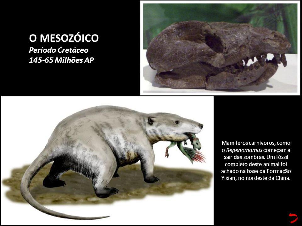 O MESOZÓICO Período Cretáceo 145-65 Milhões AP