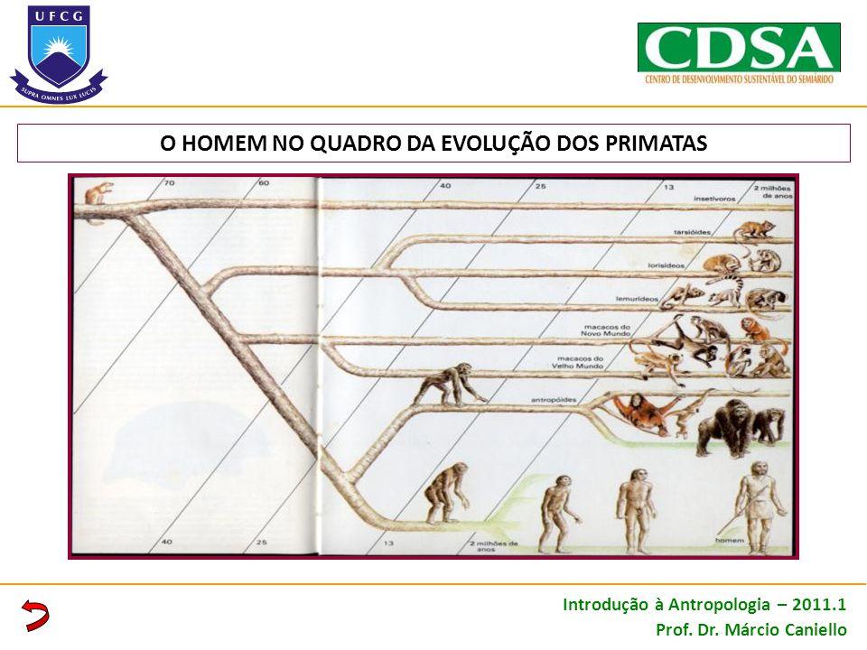 O HOMEM NO QUADRO DA EVOLUÇÃO DOS PRIMATAS